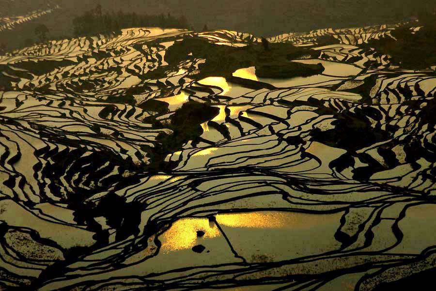 irrigated fields.jpg